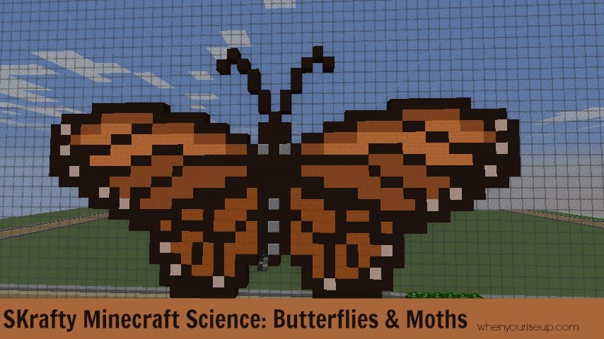 Young Science: Butterflies and Moths