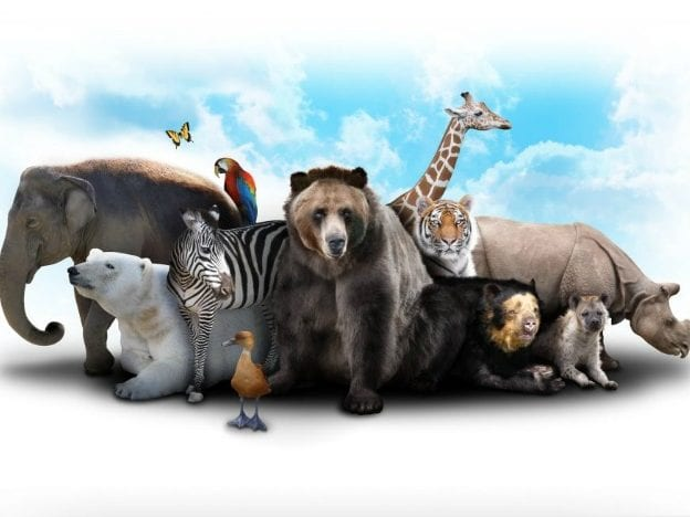 Young Science: Animals & Their Habitats course image
