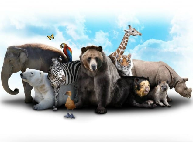 Young Science: Animals & Their Habitats