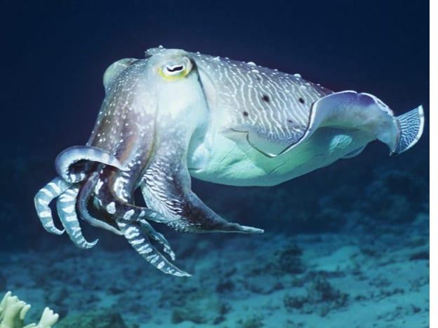 High School Marine Biology