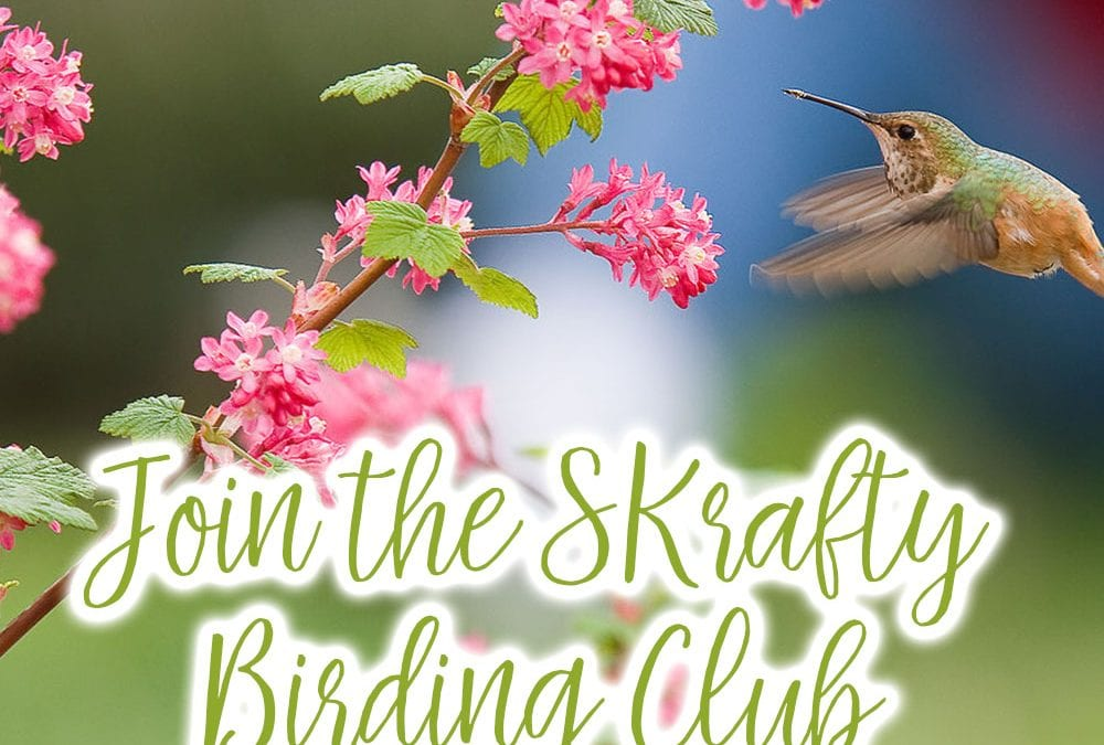 SKrafty Homeschool Bird Club Participate in the Great Backyard Bird Count