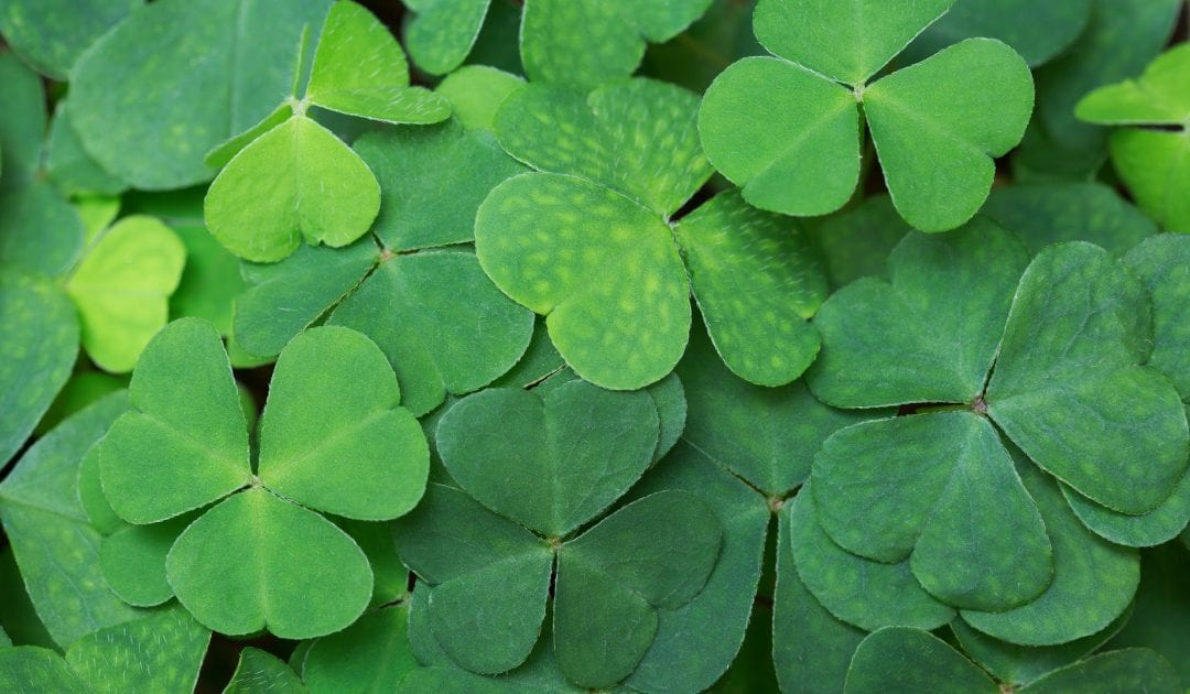 St. Patrick's Day Online Class